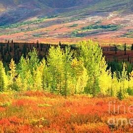 Denali autumn tundra by Frank Townsley