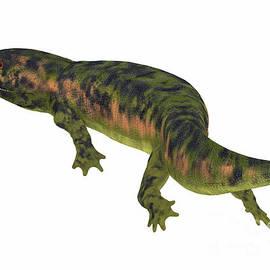 Dendrerpeton Amphibian Tail