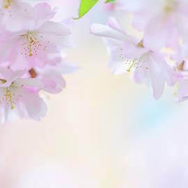 Descending Deities. Spring Pastels by Jenny Rainbow