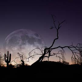 Desert Moon Rise by Amy Sorvillo