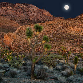 Desert Moonrise by Leland D Howard