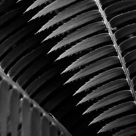 S R Shilling - Desert Plant #4