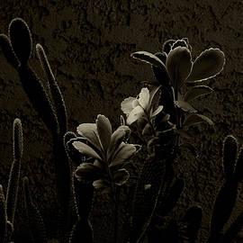 Desert Plants by Tianxin Zheng