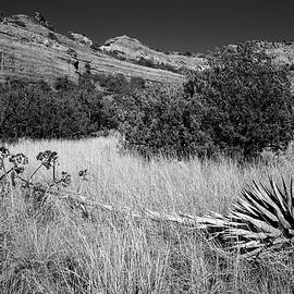 Desert Scape by Tranquil Light Photography
