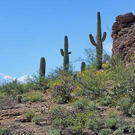 Desert Sentinels by Nikolyn McDonald