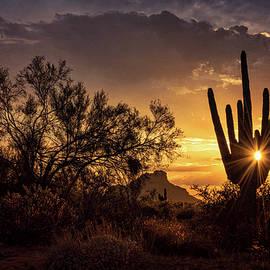 Saija Lehtonen - Desert Skylight