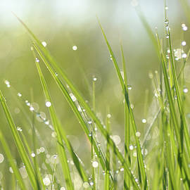 Janet Rockburn - Dew On Grass