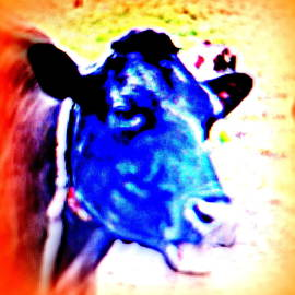 Hilde Widerberg - did you know that cows also have special needs