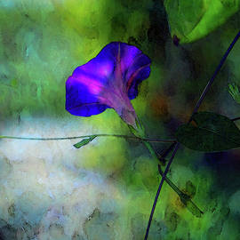 Steven Ward - Digital Watercolor Morning Glory 4407 W_2