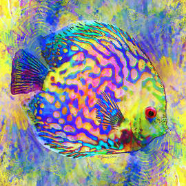 Stacey Chiew - Discus Fish