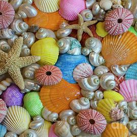Seashells 10 by Bob Christopher