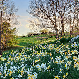 Divine Bovines by Bill Wakeley
