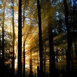 Divine Rays of Sunshine by Dianne Cowen
