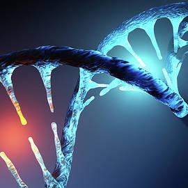 Johan Swanepoel - DNA strand