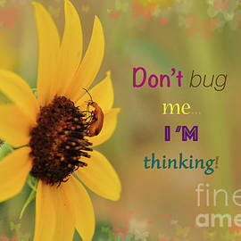 Do Not Bug Me