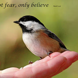 Debbie Oppermann - Do Not Fear