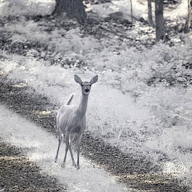 Doe In Infrared by Brian Hale