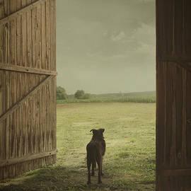 Mythja Photography - Dog in countryside