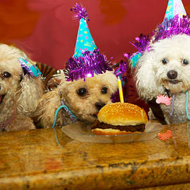 Dog Party by Diana Haronis