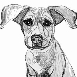 Ania M Milo - Dog Sketch in Charcoal 7