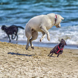 Dogs on the Sand 3 Watch Out