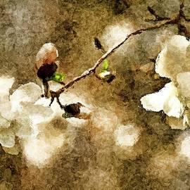 Geraldine Scull - Dogwood blossom framed
