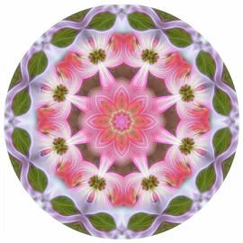 Dogwood Energy Mandala by Beth Sawickie