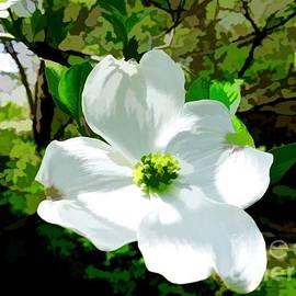 Debra Lynch - Dogwoods Blossoms In Spring Time