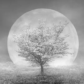 Debra and Dave Vanderlaan - Dogwoods in the Moon Black and White