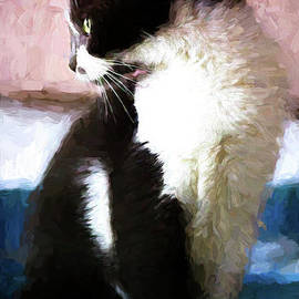Pamela Moran - Dolce Painted