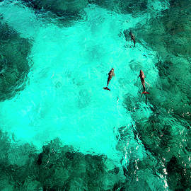 Dolphins on Isla Mujeres - Punta Sur, Aerial Image by David Daniel