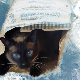 Don't Let the Cat Out of the Bag by Donna Kennedy