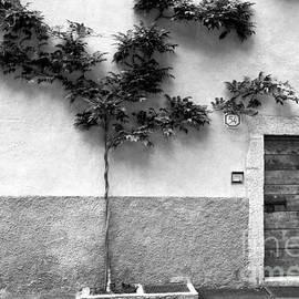 Ramona Matei - Door 54 BW