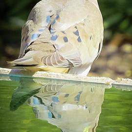 Dove's Reflection by Stephanie Forrer-Harbridge