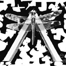 Dianne Lynn Benanti - Dragonfly