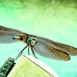 Kay Brewer - Dragonfly Eating His Bug