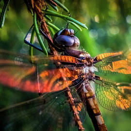 Dragonfly by Lilia D