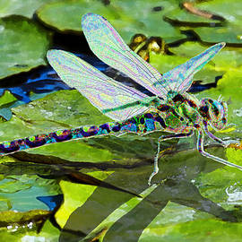 Dragonfly on Lilypad by Michele Avanti