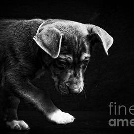 Edward Fielding - Dramatic Black and White Puppy Dog