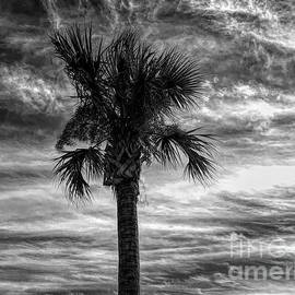 Dramatic Palm Tree in Black and White by Luther Fine Art