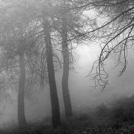 Dream forest. Living in a dream. WB by Guido Montanes Castillo