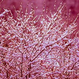 Dreaming In Red - Winter Wonderland by Susanne Van Hulst