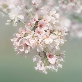 Dreaming of Spring by Kim Hojnacki