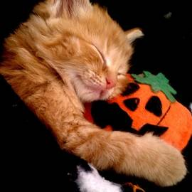 Traci Eagle - Dreaming of The Great Pumpkin