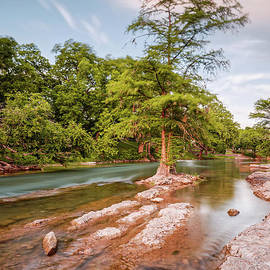 Silvio Ligutti - Dreamy Bald Cypress at Guadalupe River - Canyon Lake Texas Hill Country