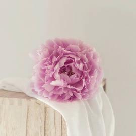 Dreamy Pink Peony by Kim Hojnacki