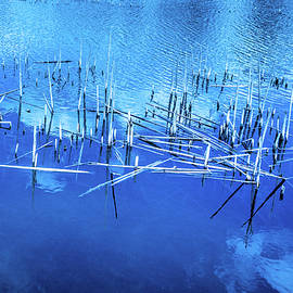 Judith Barath - Dried Reed Chunks in Water