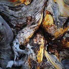 Driftwood Abstract by Nadalyn Larsen