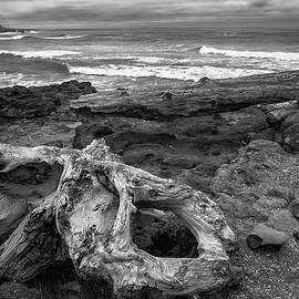 Driftwood and Waves by Steven Clark