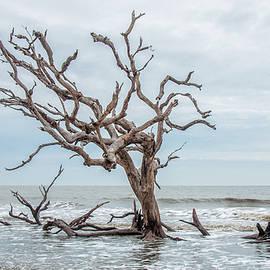 Driftwood Beach Jekyll Island by Andrew Wilson